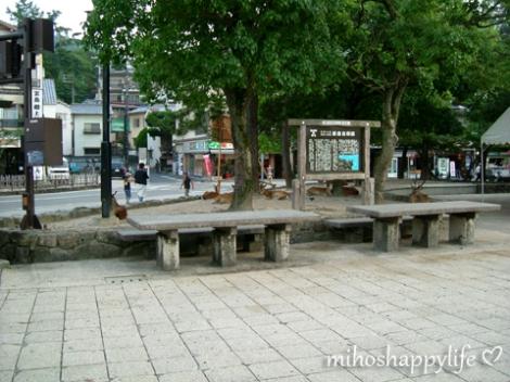 Miyajima_45