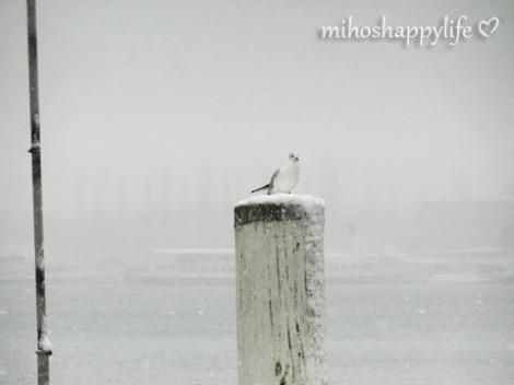 WinterParadiseLU_12
