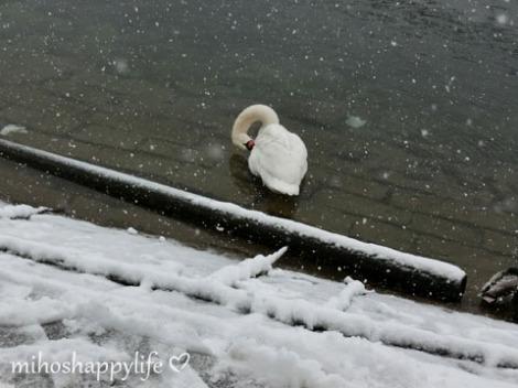 WinterParadiseLU_4