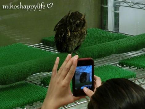 OwlCafe_12