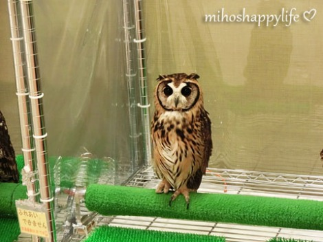 OwlCafe_13