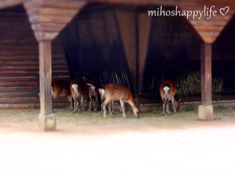 TierparkGoldau-21