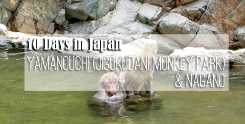 10-days-in-japan-yamanouchi-jigokudani-monkey-park-nagano